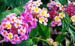 Casa De Piedra Escazu Terapia Floral Flores De Bach En Costa Rica